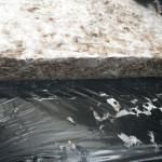 Edges show mycelia has grown through but density is not high