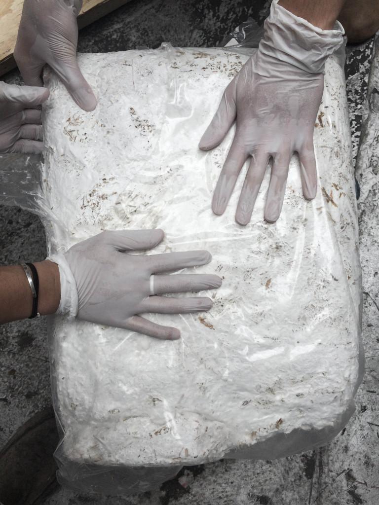 Sealed mycelia culture, approximately 11 days sealed