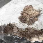 No oxygen in the sealed mycelia bag, arrests growth