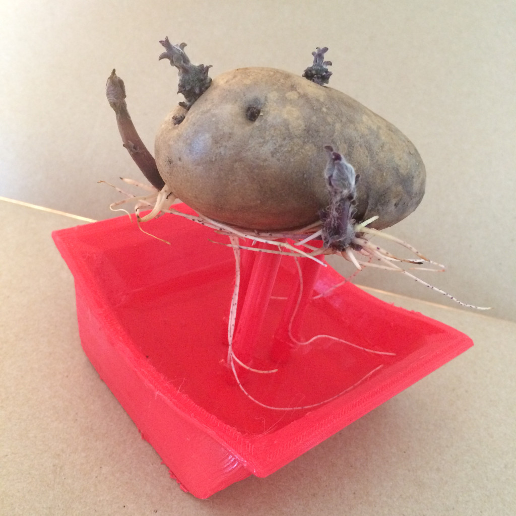Potato sculpture profile view