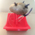 Potato sculpture with roots trained into water basin