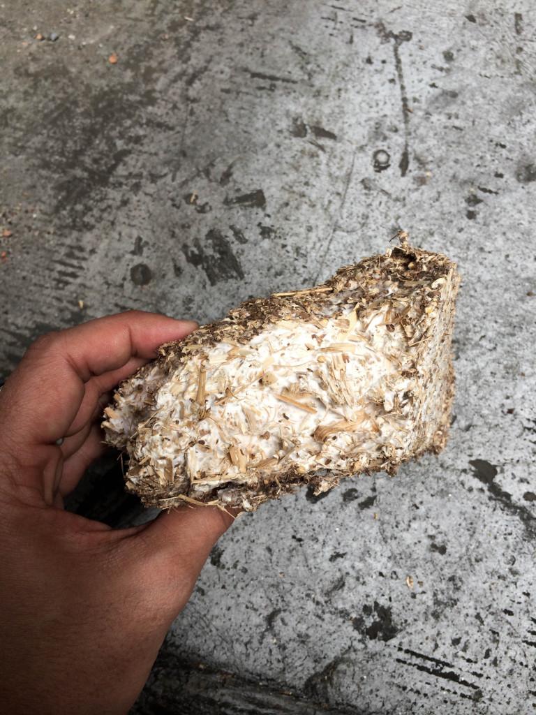 High density mycelia
