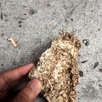 Mid density mycelia